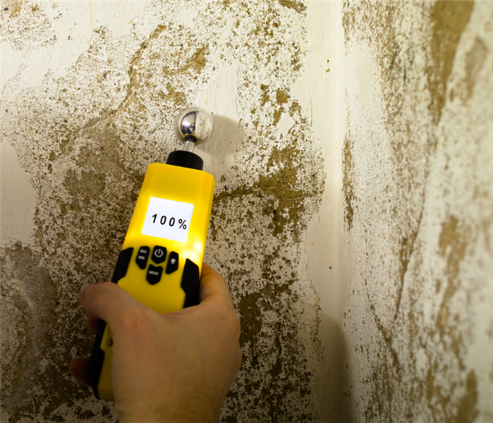 Commercial SERVPRO Can Tackle Any Mold Damage In Your Northfield Home